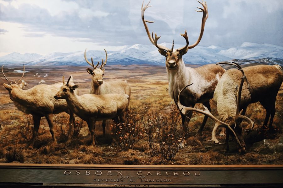 Museum-Natural-American-History-NYC-tour.jpg