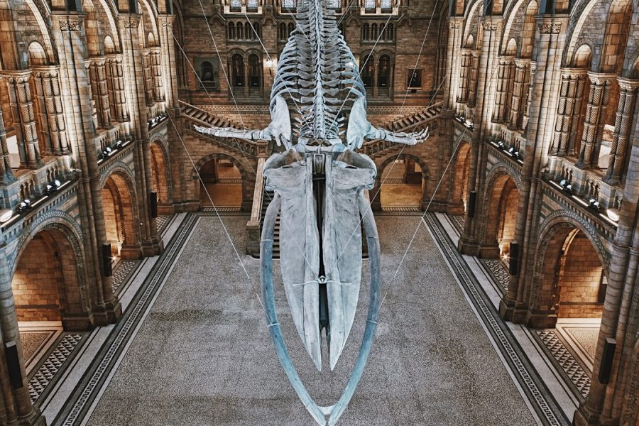 Museum-Tour-Natural-History-London