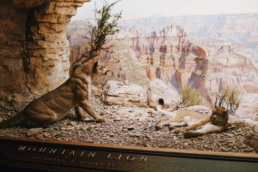 NYC-Tour-American-Museum-Natural-History