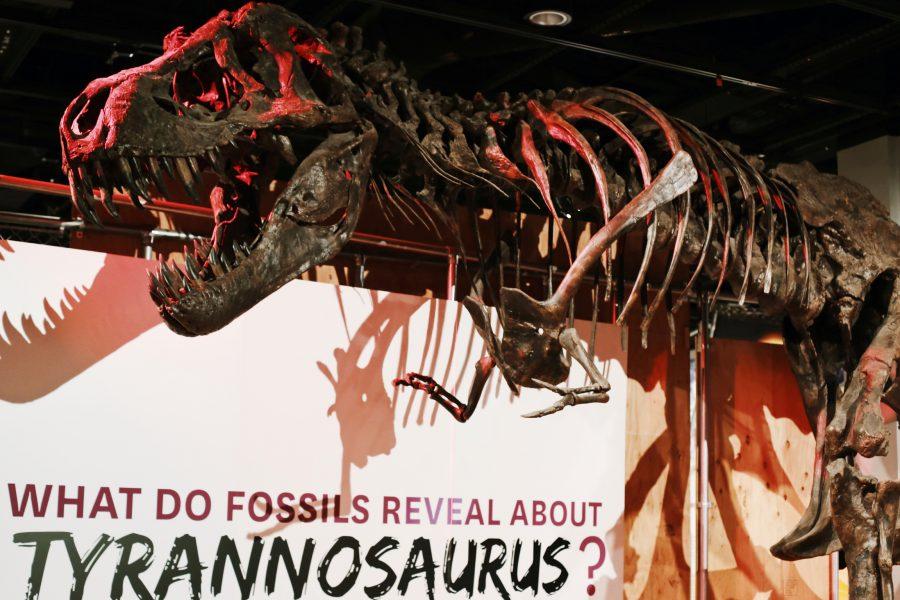 Smithsonian-Natural-History-Museum-Washington