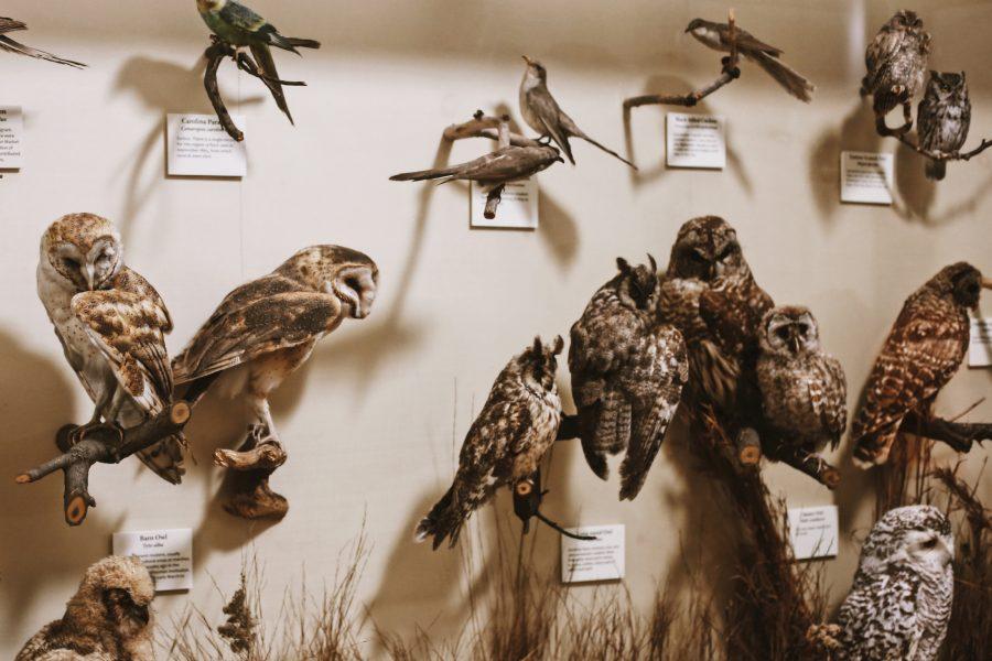Smithsonian-Natural-History-Museum-Washington-Tour