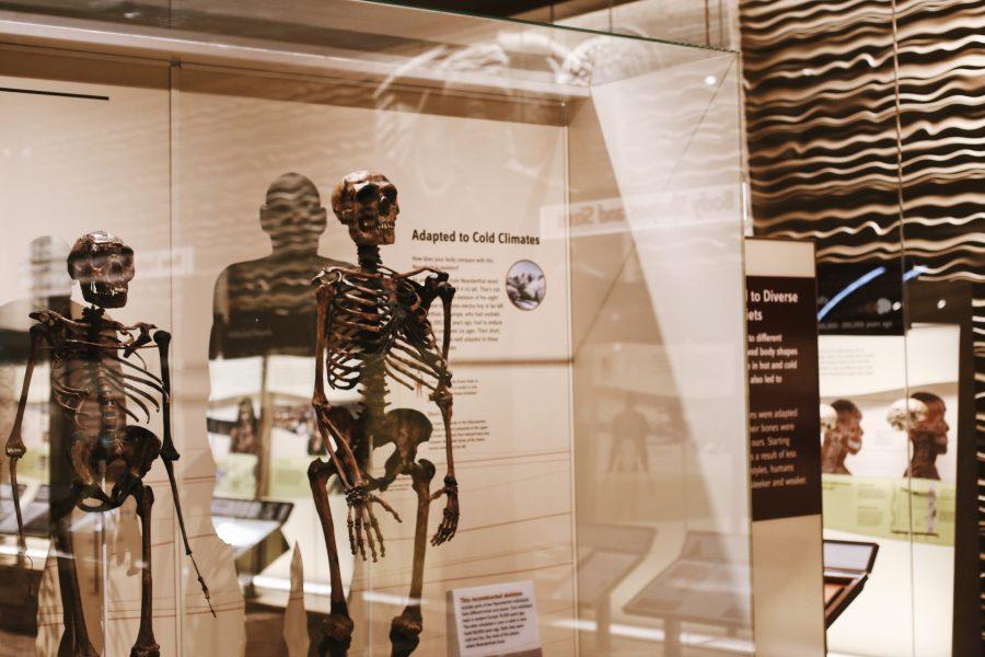 Smithsonian-Tour-DC-Washington-History-Museum-Natural