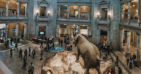 Smithsonian National Museum of Natural History Guided Tour – Semi-Private