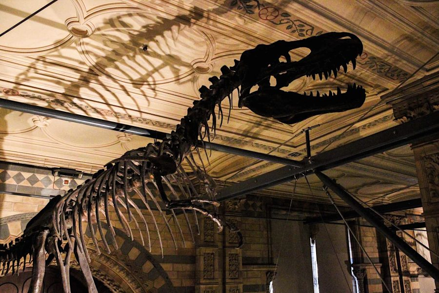 Tour-Guided-Natural-History-London