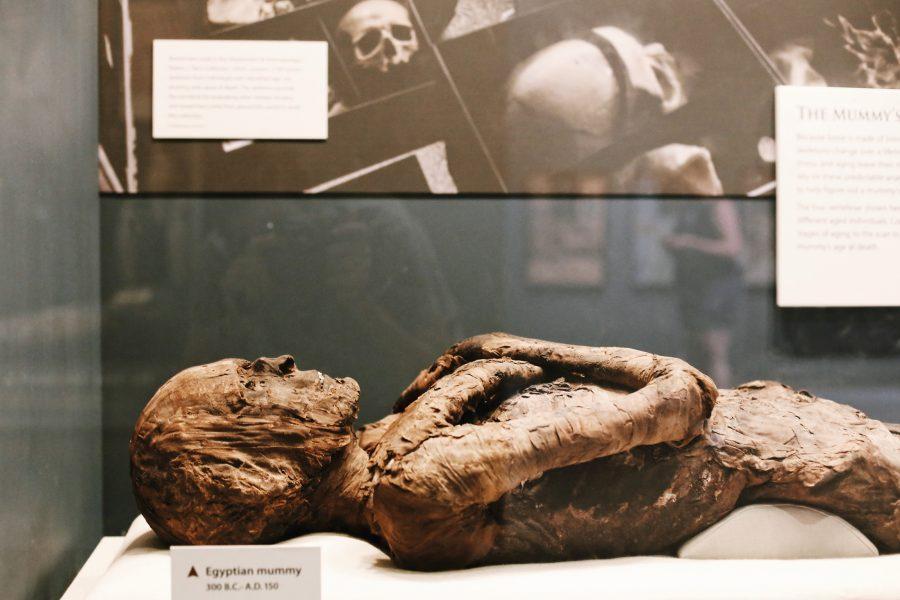 Tour-Smihtsonian-Natural-History-Museum-Washington-DC