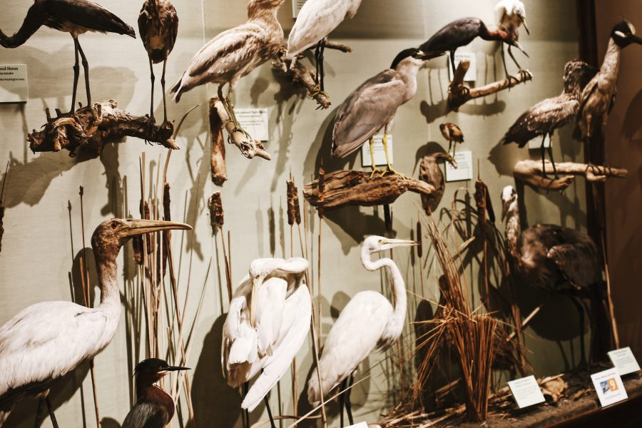 Tour-Smithsonian-Museum-Washington-DC-Natural-History