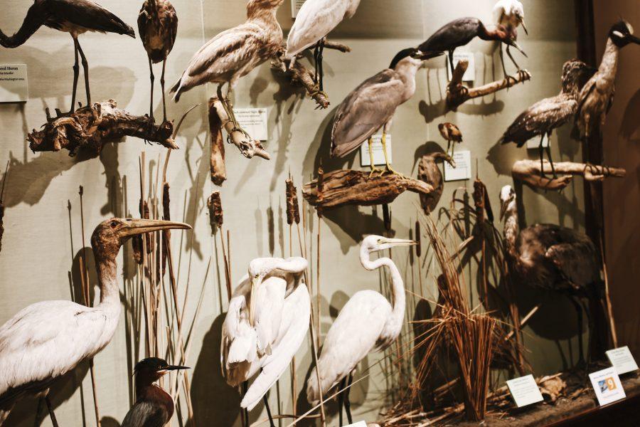 Tour-Smithsonian-Museum-Washington-DC-Natural-History