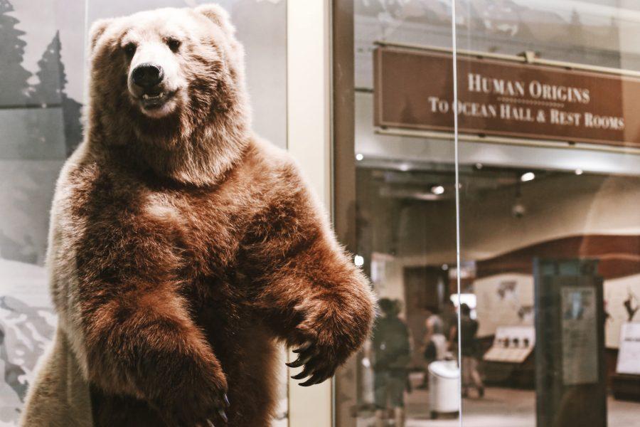 Washington-DC-Tour-Smithsonian-Natural-History-Museum