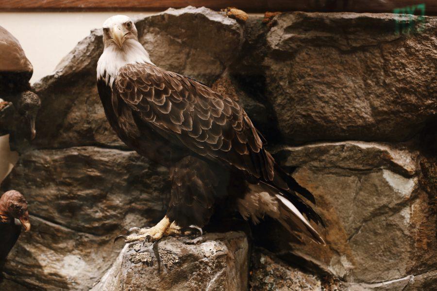 Washington-Smithsonian-Tour-DC-Museum-History-Natural