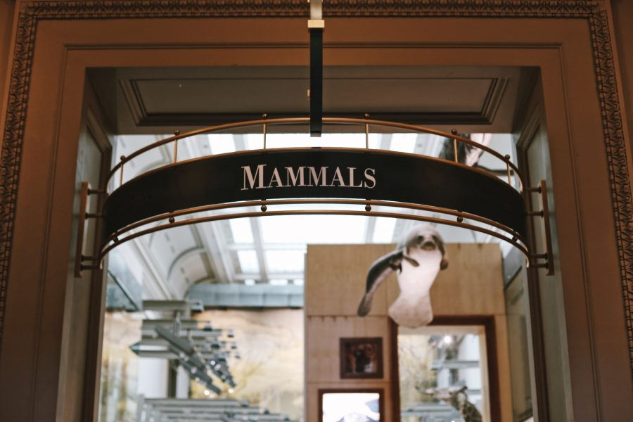 Washington-Tour-DC-Smithsonian-History-Natural-Museum